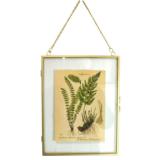 Affiche en verre botanique